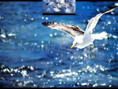 Neil Diamond Skybird Jonathan Livingston Seagull HD - YouTube I post this song for 2 of my sons, Paul and Joshua ... we played this over and over at the darkest point of our lives...