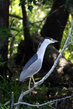 Birds of the St. Johns River