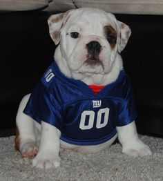 11 Amazingly Athletic Dogs That Make Me Want To Stop Being Lazy. Sylvia  Madrid Mariscal · I ❤ NY Giants 9f501d7cb