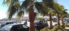 MOTRIL. Continúa también el plan de poda de palmeras y árboles en la zona de la Huerta de San Francisco, junto a la casa de La Palma.