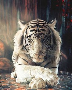 White Tiger  By Alexander Tharimotov  Tag your best photos with #seewildlife and follows us to be featured!!  Follow all our profiles @see_earth Discover the world with beautiful pictures @see_wildlife Discover the wild world our animals pictures!  #wildernessculture #wildlife #travelonfire #nakedplanet#awesome_earthpix #warrenjc #animals #wild #wildlifeonearth #fantastic_earth#bpmag#wildatlanticway #wildernessbabes #wildernessquest #animal #animals #animalphotography#animalplanet…