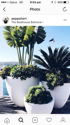Easy Container Gardening Ideas for Your Potted Plants . The best part: You can plant anything in a planter as long as there's plenty of . Easy Container Gardening Ideas for Your Potted Plants . Outdoor Pots, Outdoor Gardens, Outdoor Potted Plants, Potted Palms, Large Outdoor Planters, White Planters, Indoor Outdoor, Apartment Balcony Garden, Garden Art