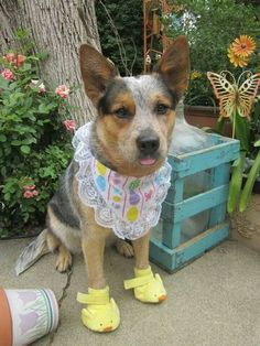 Navi dressed for Easter
