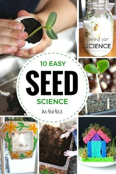 Seasonal science and STEM activities with seed experiments! Grow seeds for easy seed science activities with kids. Make a seed jar, greenhouse, grow grass!