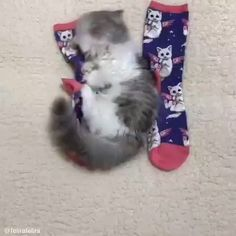 Sock monster Best Picture For Cutest Baby Animals videos For Your Taste You are looking for somethin Funny Cute Cats, Cute Cats And Kittens, Cute Funny Animals, Cute Baby Animals, Kittens Cutest, Animals And Pets, Cute Dogs, Fluffy Kittens, Fluffy Dogs