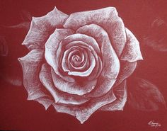Rose - White pencil drawing on red paper
