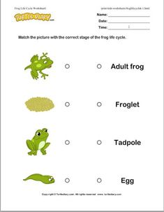 Free! Frog Life Cycle Worksheets! These worksheets go along with the Life Cycle of A Frog video lesson that I pinned earlier.