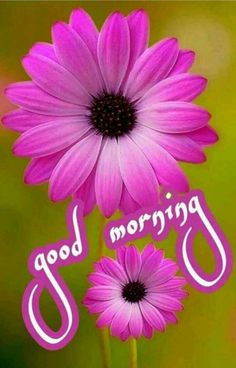 Good Morning Cards, Good Morning Flowers, Good Morning Coffee, Good Morning Photos, Good Morning Messages, Good Morning Greetings, Morning Quotes, Morning Msg, Good Morning Beautiful Images