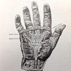 Vintage anatomical drawing medical illustration skeleton of the hand book page , paper ephemera human anatomy.