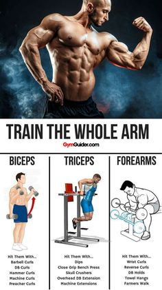 For most people working out the biceps and triceps on the same day is a good idea. When you work out one part of your arm you are often engaging other parts as well.You can do separate exercises for triceps and biceps or combination moves that work out Gain Muscle, Muscle Mass, Build Muscle, Muscle Building, Biceps And Triceps, Biceps Workout, Gym Training, Weight Training, Bodybuilder