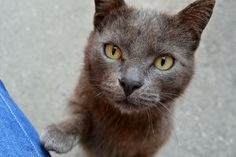 Gattino Anonimo Suburban Cats