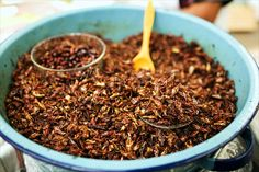 fried grasshoppers: better that chips!