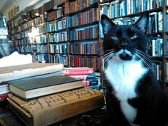 Lists about bookstores and cats never get old.
