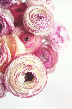 Puuurdy ranunculus's we're using in this seasons arrangements at www.farmgirlflowers.com