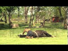 O encantador de cavalo