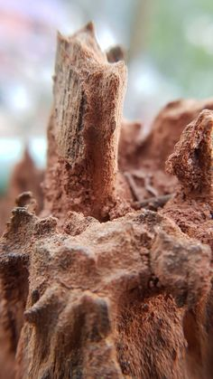 Dry Tree Covered By Termite Mud Ultra HD Mobile Wallpaper. Photography Wallpapers, Dry Tree, Mobile Wallpaper, Mud, Stuffed Mushrooms, Vegetables, Cover, Stuff Mushrooms, Veggies