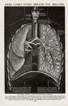 Antique print ANATOMY LUNGS medical diagram of human anatomy chart medical print