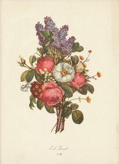 Vintage Prevost French Flower Print by vintagegoodness, $11.95
