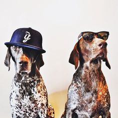 """""""If It Wags"""" – Meet Gus and Travis (10 Pictures)"""