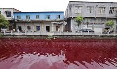 "Locals baffled as river in China turns BLOOD RED in just an hour LOCALS have been left baffled after a river turned BLOOD RED in just an hour. Published: Fri, July 25, 2014 Northern and Shell Copyright ©2014 Northern and Shell Media Publications. ""Daily Express"" is a registered trademark. All rights reserved."