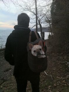 This is what a three mile walk looks like with a frenchie