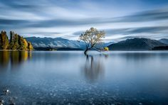 ''That Wanaka Tree'' by Visual Collisions - Photo 158396655 / 500px
