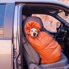 Queste adorabili foto di cani che campeggiano vi faranno venire voglia di escursioni nella natura