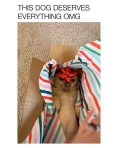 Funny Dog Jokes, Cute Funny Dogs, Dog Memes, Funny Animal Videos, Funny Animal Pictures, Cute Funny Animals, Cute Baby Animals, Wild Animals, Cute Animal Memes
