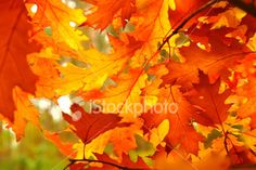 Google Image Result for http://i.istockimg.com/file_thumbview_approve/4011035/2/stock-photo-4011035-autumn-leaves.jpg