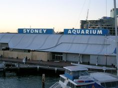 Sea Life Aquarium #Sydney - A Scintillating Experience - The #aquarium opened in 1988 during the celebrations of #Australia's bicentenary. It has over 13000 animal collections with more than 700 species. #travel #tourism #wonderlust