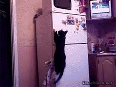11 Pets Who Are Totally Earning Their Keep | http://bzfd.it/1lmRlDI