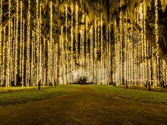 The Most Amazing Christmas Lights Display May Be at This South Carolina Botanical Garden