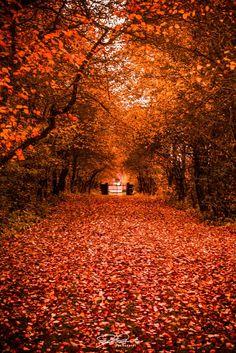 *Tunnel of Fall* by Kicka Terho