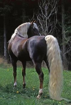 Beautiful Horse! Love the Contrast Colors !!