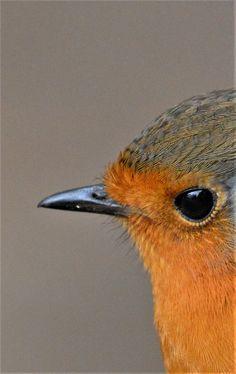 Small Birds, Little Birds, Colorful Birds, Pet Birds, Nature Animals, Animals And Pets, Cute Animals, Beautiful Birds, Animals Beautiful