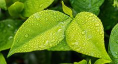 Growbox, temperatura e umidità cosa c'è da sapere