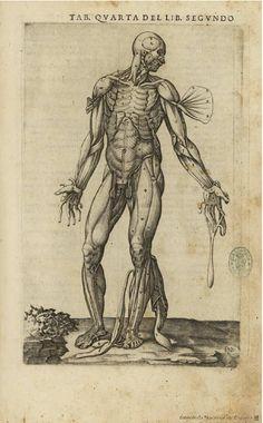 Historia de la composicion del cuerpo humano. Valverde de Hamusco, Juan — Libro — 1556