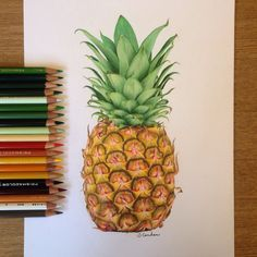 Pineapple drawing using Prismacolor pencils ✨                                                                                                                                                                                 More