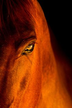 Great portrait of a horse,  for great photography go here,  http://500px.com/NinaohmanOjeda