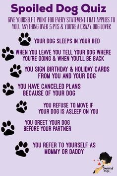 I Love Dogs, Puppy Love, Cute Dogs, Dog Quotes Love, Dog Loyalty Quotes, Dog Sayings, Dog Poems, Poems About Dogs, Funny Dogs