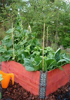 vegetables in pallet collars Back Gardens, Outdoor Gardens, Raised Garden Beds, Raised Beds, Pallet Collars, Garden Solutions, Greenhouse Growing, Garden Yard Ideas, Pallets Garden