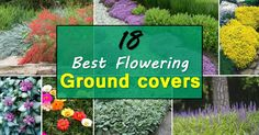 18 Best Flowering Ground Cover Plants Check out these 18 Flowering Ground Cover Plants, you'll find some best low growing plants on this list, they're not only easy to grow but looks beautiful too. Outside Plants, Outdoor Plants, Outdoor Gardens, Outdoor Spaces, Ground Cover Flowers, Ground Cover Plants, Garden Web, Lawn And Garden, Herb Garden