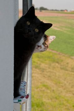 Lucky black cat and feline friend
