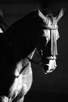 Andalusian horse by javidelucar,