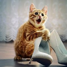 My cat with my heels at my wedding
