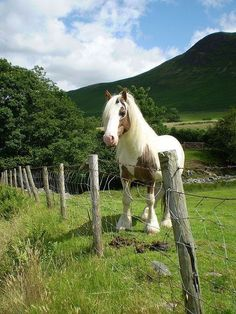 Gypsy Vanner horse in a beautiful pasture.Gotta be the UK Most Beautiful Animals, Beautiful Horses, He's Beautiful, Beautiful Pictures, Farm Animals, Cute Animals, Gypsy Horse, Into The West, Majestic Horse