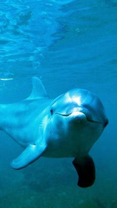 Dolphin Images, Dolphin Photos, Cute Little Animals, Cute Funny Animals, Beautiful Horses, Animals Beautiful, Dolphin Tale, Underwater Animals, Beautiful Sea Creatures