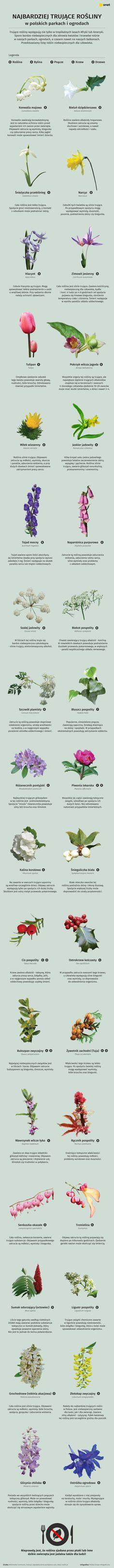 Najbardziej trujące rośliny ogrodowe