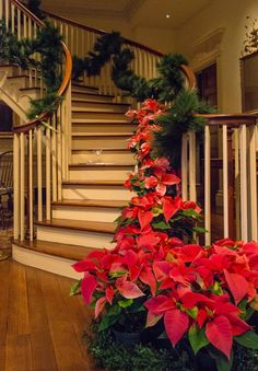 Montmorenci staircase, Yuletide at Winterthur 2014. Photo by Bob Leitch