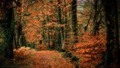 Autumn mood! - null